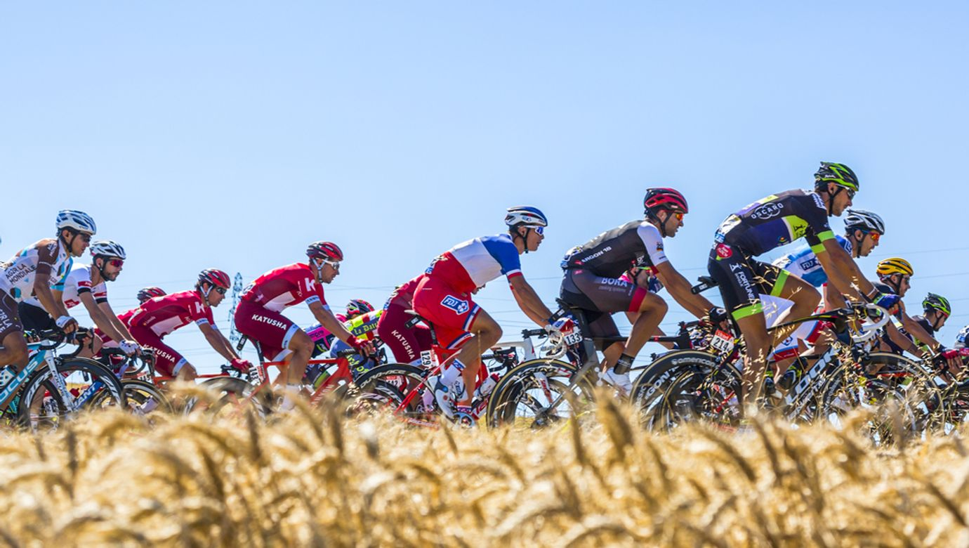 Peloton Tour de France projíždí mezi poli.