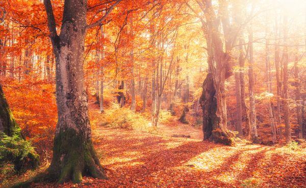 Do lesa můžete bez roušky. Navíc posiluje imunitu a odbourává stres