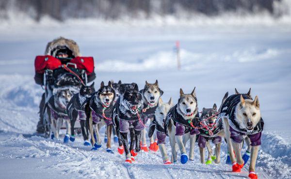 Příští aljašský Iditarod bude bez obhájce